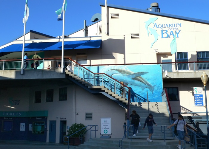 San Francisco's only waterfront aquarium is conveniently located next to Pier Walk through ft. of crystal clear tunnels filled with sharks, rays and more than 20, other marine animals from the Bay and nearby waters—it's like skin diving without getting wet.